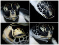 Free View On Four  Heads Of Sea Turtle Royalty Free Stock Photo - 19466035