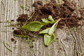 Free Sprout With Soil Royalty Free Stock Image - 19466826