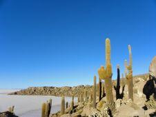 Free Incahuasi Island. Salar De Uyuni. Bolivia. Stock Images - 19462474