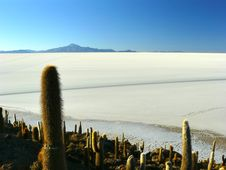 Free Incahuasi Island. Salar De Uyuni. Bolivia. Stock Photos - 19462633