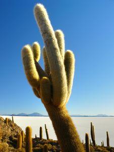 Free Incahuasi Island. Salar De Uyuni. Bolivia. Royalty Free Stock Photo - 19462655