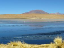 Free Lagoon On The Altiplano, Bolivia. Royalty Free Stock Photo - 19463235