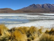 Free Lagoon On The Altiplano, Bolivia. Royalty Free Stock Photo - 19463295