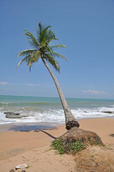 Free Kosgoda Beach,Sri Lanka Stock Photo - 19463500