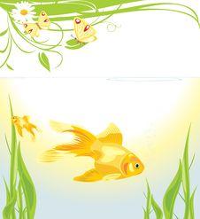 Free Goldfishes Among Algae Royalty Free Stock Photography - 19466477