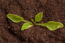 Free Sprout With Soil Royalty Free Stock Images - 19466819