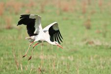 Free Stork Royalty Free Stock Image - 19467966