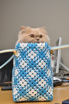 Free Persian Cat Stock Images - 19468854