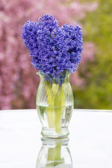 Hyacinths In A Vase With Spring Background Stock Image