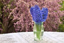 Free Purple Hyacinths, Lace Tablecloth And Blossoms Royalty Free Stock Image - 19470156