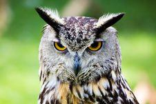Free Owl Portrait Stock Photo - 19470270
