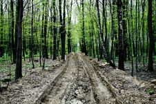 Free Road Through The Forest Royalty Free Stock Photo - 19470705