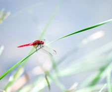 Free Dragonfly Stock Photo - 19470850