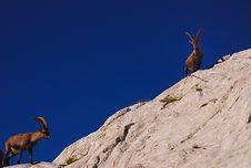 Free Ibex, Dolomites Royalty Free Stock Images - 19473539