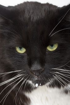 Free Cat S Face Closeup Royalty Free Stock Photography - 19474617