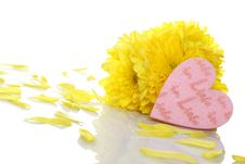 Free Yellow Chrysanthemums With Two Red Hearts Royalty Free Stock Photo - 19477405