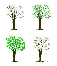 Free Four Seasons Tree Royalty Free Stock Photos - 19478518