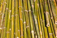 Free Grenn Bamboo Pattern Texture Horizon Stock Photo - 19478970