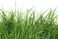 Free Fresh Green Grass With Dew Drops Royalty Free Stock Image - 19486636