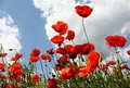 Free Poppies Royalty Free Stock Image - 19489866