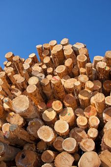 Free Woodpile Royalty Free Stock Images - 19481639