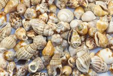 Free Greek Island ,seashells And Oysters Royalty Free Stock Photos - 19481848