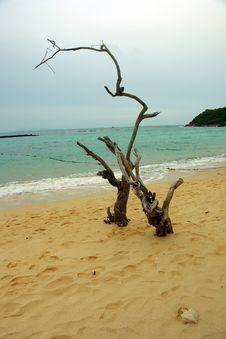 Free Thai Coast Royalty Free Stock Photo - 19484965