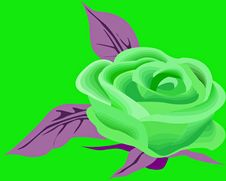 Free Green Rose Royalty Free Stock Images - 19485529