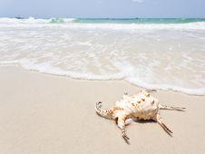 Free Seashell On White Sand Royalty Free Stock Image - 19487276