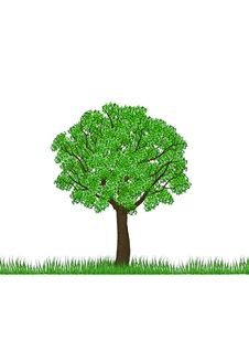Free Green Tree Royalty Free Stock Image - 19489696