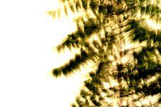 Neem Leaves Stock Photos