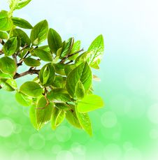 Free Green Leaf Royalty Free Stock Images - 19491239