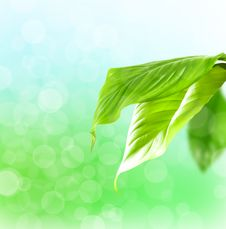 Free Green Leafs Royalty Free Stock Image - 19491266