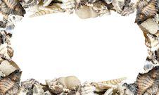 Free Seashell Stock Photo - 19491570