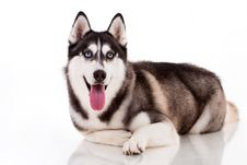 Free Dog Stock Image - 19492561