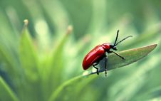 Free A Bug Stock Photography - 19492562