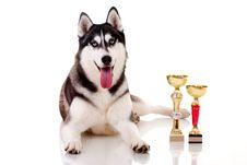 Free Dog Royalty Free Stock Photography - 19492647