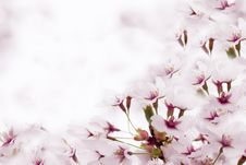 Free Blossoms Stock Photography - 19492692