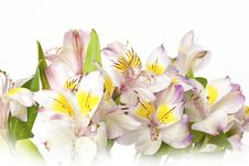 Free Bouquet Of Lilies Background Stock Photo - 19493150