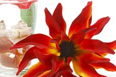 Free Glass And Flower Decoration Stock Photos - 19493303