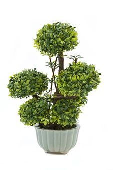 Free Bonsai Tree Royalty Free Stock Photos - 19493328