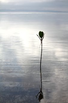 Free Lonely Plant Stock Photos - 19494153