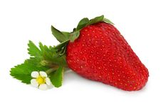 Free Red Strawberry Isolated Stock Photography - 19495292