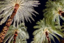 Tropical Palm Trees At Night Stock Photography