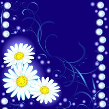 Free Night Daisies Stock Images - 19496104