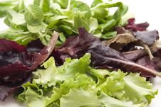 Free Different Lettuce Leaves Royalty Free Stock Image - 19496246