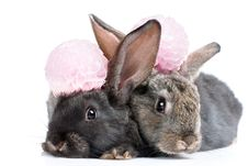 A Two Rabbits Stock Photos