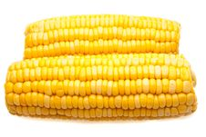 Free Corn-cob Isolated Royalty Free Stock Image - 19497666