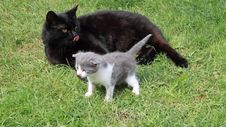 Free Black British Purebred Mother Cat And Newborn Baby Stock Photo - 19498250