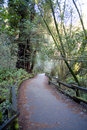 Free Forest Trail Stock Photography - 1953092